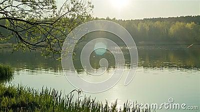 Lago forest alla sera video d archivio