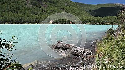 Lago na manhã do verão, lago highland Kucherlinskoye, montanhas de Altai, Rússia video estoque