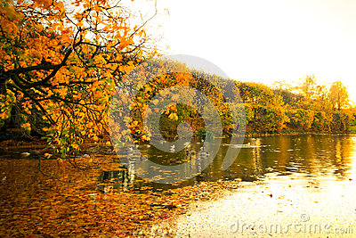 Lagoa bonita do parque no outono