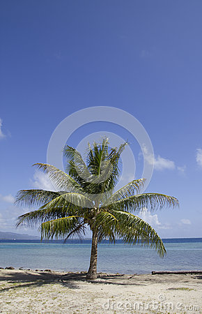 Lagoon palm tree