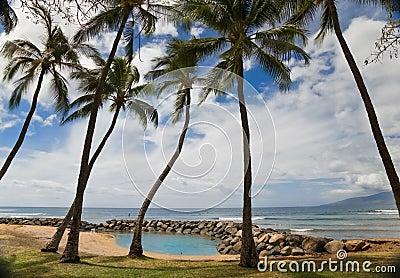 Lagun drzewka palmowe