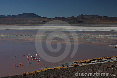 Laguna Colorada shore with flamingos