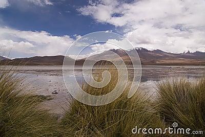 Laguna Hedionda em Bolívia