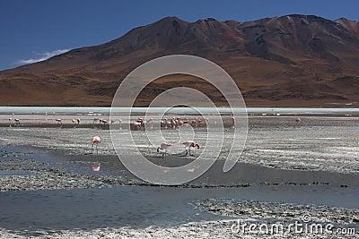 Laguna Hedionda with Flamingos