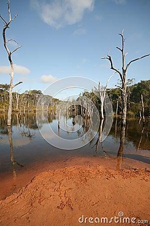 Laguny sheldon drzewa podwodni