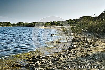 Lake Albufera