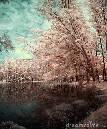 Free Lake And Trees In Infrared View Royalty Free Stock Photo - 5388205