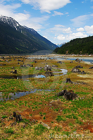 Free Lake Bed With Dead Trees Royalty Free Stock Photos - 5299608