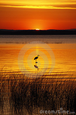 Lake Champlain Bird and Golden Sunrise