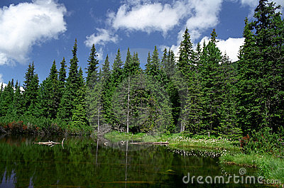 Lake with fallen trees