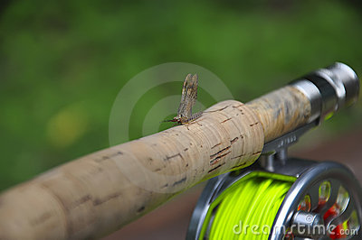 Lake fly sitting on a rod