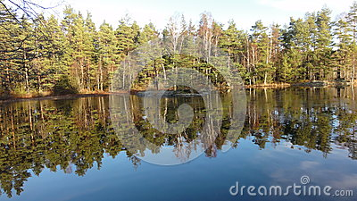 Lake in the forrest