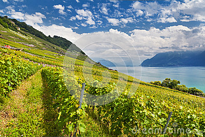 Lake Geneva with vineyards