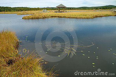Lake and grassland