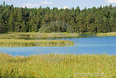 Lake with high grass