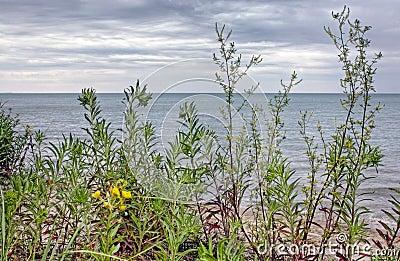 Lake Huron Coastline