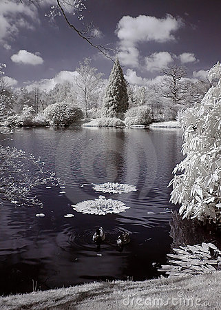 Free Lake Infrared Royalty Free Stock Images - 124799