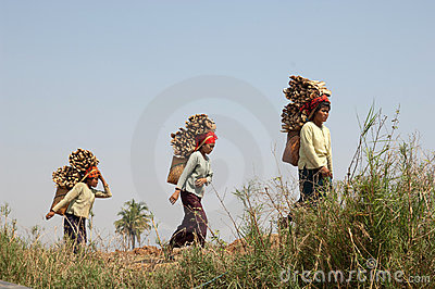 Lake Inle Myanmar, burmese women carrying wood Editorial Stock Photo