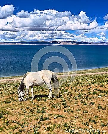 Lake Nam and horse