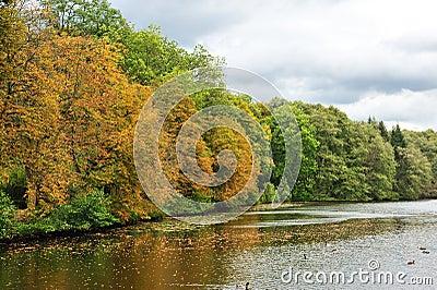 Forest in autumn season near the lake