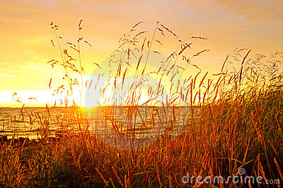 Lake shore grass at sunset
