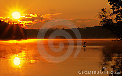 Lake Sunrise with Swan