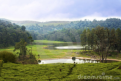 Lake surrounded by tea plantation in Bandung
