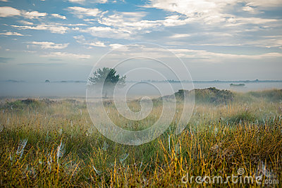 Lake and swamps area at Misty morning