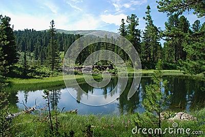 Lake in taiga