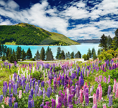 Free Lake Tekapo, New Zealand Stock Image - 14228351