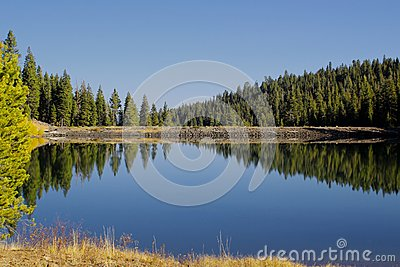 Lake tree reflection Tahoe California