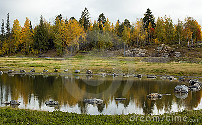 Lake and trees landscape