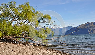 Lake Wanaka Willows, New Zealand