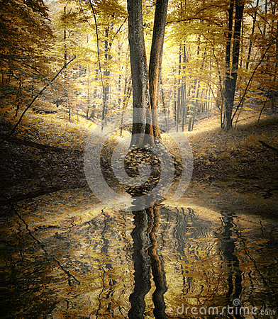 Free Lake With Reflection Of Tree In A Colorful Forest In Autumn Stock Photography - 37518582