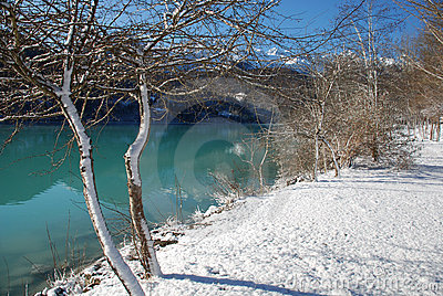 Lakeside Trees in Snow, Friuli