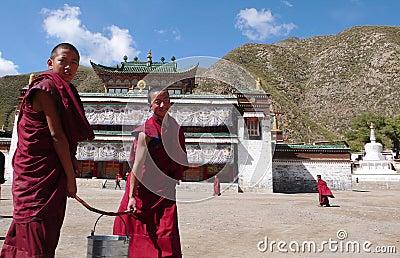 Lama s Redactionele Stock Foto