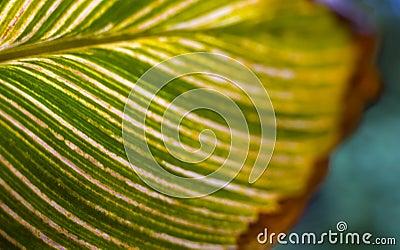 Lame verte avec des veines. Nature créatrice.
