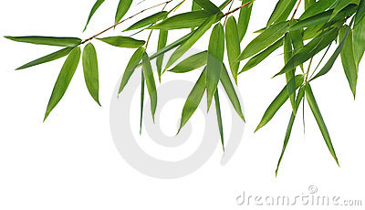Lames de bambou