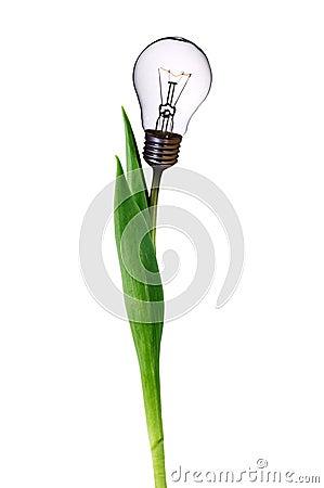 Lamp bulb tulip