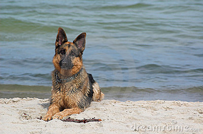 Dog by water
