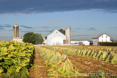 Lancaster County Tobacco Farm