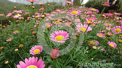 A land full of wold flowers Stock Photo