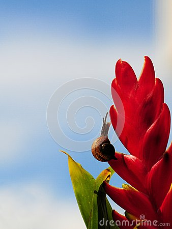 Land snail on red plant