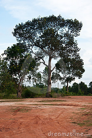 Land and tree