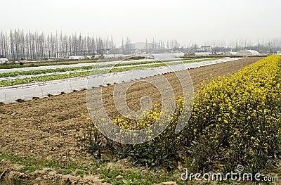 Landbouwbedrijf in China