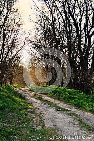 Landelijke weg, stof