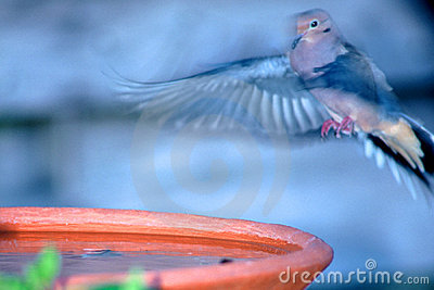 Landing at Bird Bath