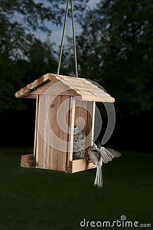 Landing on a bird feeder