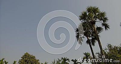 Landmark Travel Place of Chiang Mai, Tajlandia zdjęcie wideo