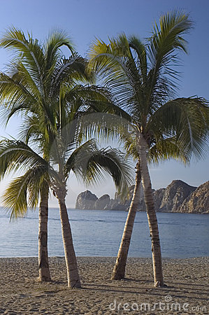Lands End and Palm Trees